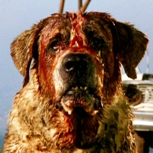 Ten Awesome Animals in Horror Movies