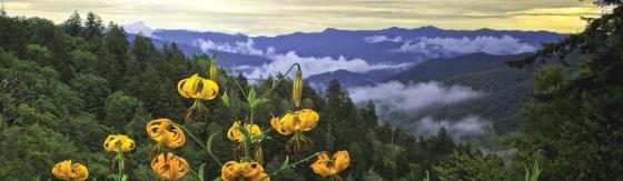Smoky Mountain 560x163