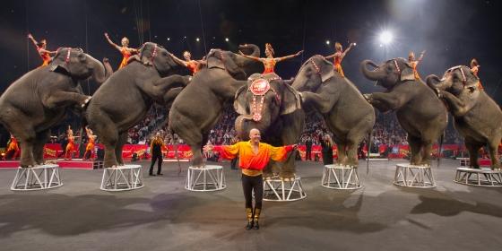 Elephants 560x280