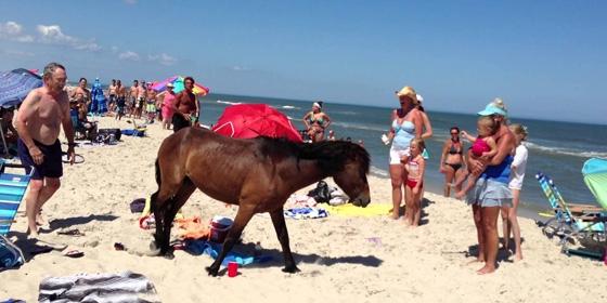 Pony 560x280