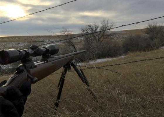 Rifle 560x401