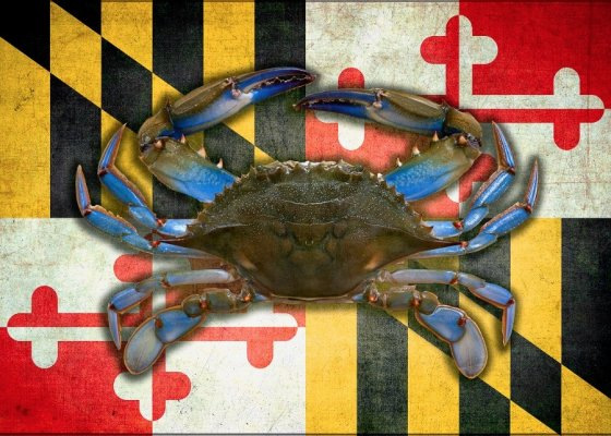 MD Crabs 560x400