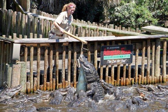 St Augustine Alligator Farm 1 560x374