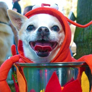 How To Dress Your Pets For Halloween