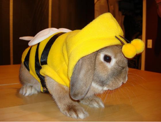 bunny 560x423