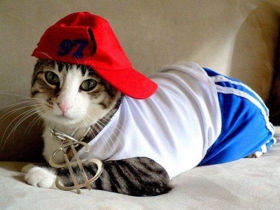 cat 560x420