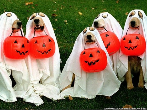 ghost dogs 560x420