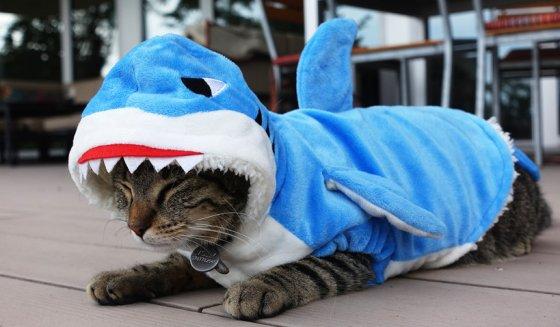 shark cat halloween costume 560x327