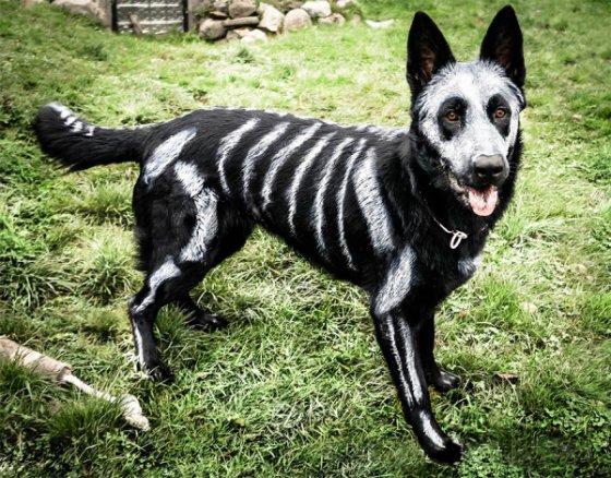 skeleton dog halloween costume non toxic pet paint 5 600x469 560x438