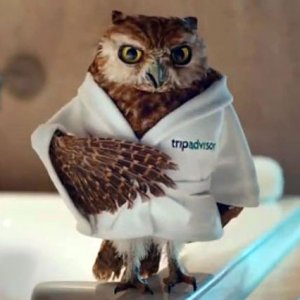 Seven Television Commercial Owls