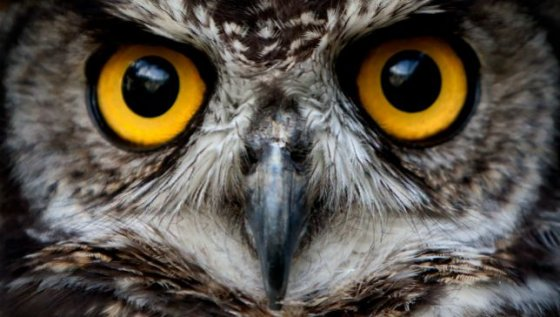night owl 560x317