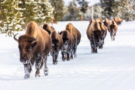 Montana Snowmobile 4 560x373