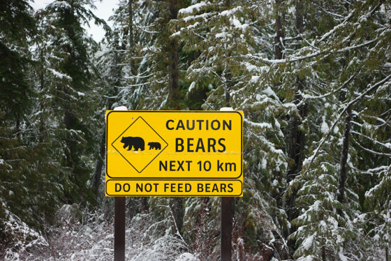 Caution Bears Road Sign Whistler 560x374