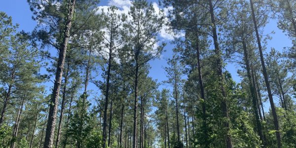 80 acres of land for sale in Dallas County, Alabama