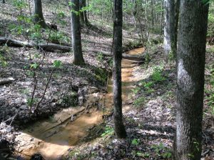 164 acres +/- of land for sale in Tuscaloosa County, Alabama