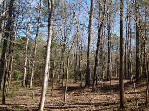 157 acres of Land for Sale in Perry County, Alabama