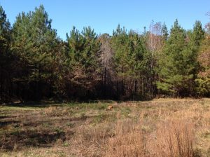 120 acres of Land for Sale in Perry County, Alabama