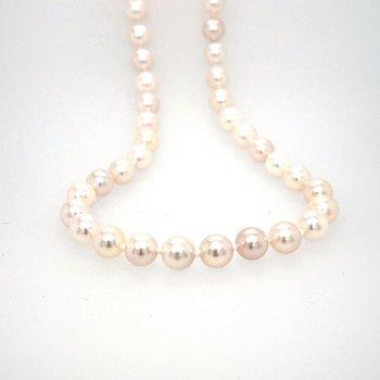 Akoya Cultured Pearls