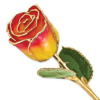 24Kt Gold Trimmed Yellow Red Rose