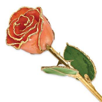 24Kt Gold Trimmed Orange Rose