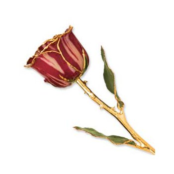 24Kt Gold Trimmed Abracadabra Rose