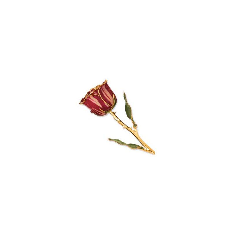 Lester Martin - Imports 24Kt Gold Trimmed Abracadabra Rose