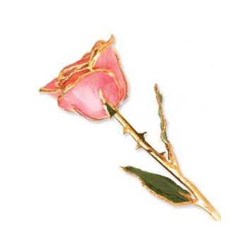 24Kt Gold Trimmed Pink Rose