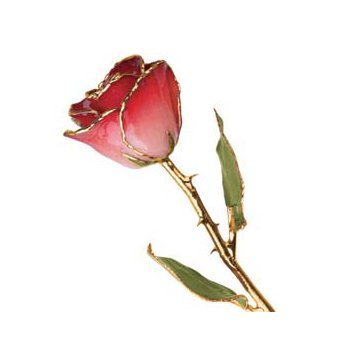 24Kt Gold Trimmed Pink & Burgundy Rose