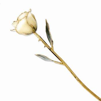 24KT Gold Trimmed Cream/White Rose