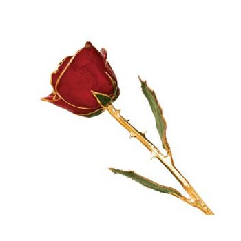 24Kt Gold Trimmed Red Rose
