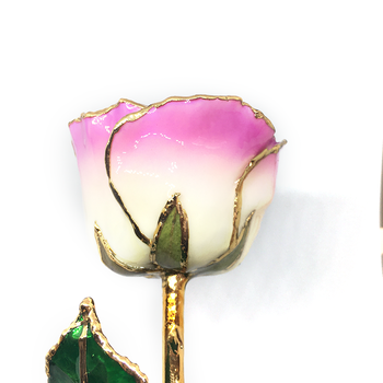 Cream-Picasso-Pink Lacquer Rose Trimmed in 24K Gold