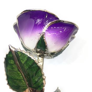 Cream-Purple Lacquer Rose Trimmed in Platinum