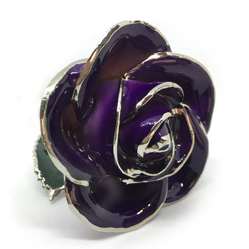 Cream-Purple Lacquer Rose Trimmed in Platinum