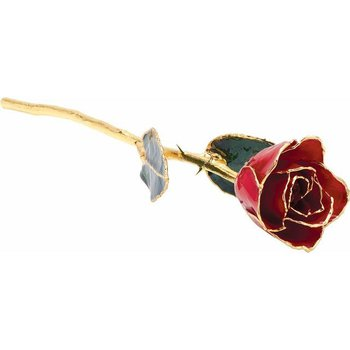 Classic Red Gold Dipped Rose