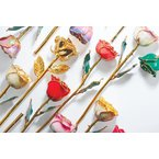 Calvin Broyles Cream and Pink Picasso Gold Dipped Rose