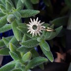 Sami Fine Jewelry Sunburst Fashion Ring
